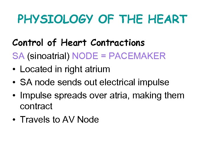PHYSIOLOGY OF THE HEART Control of Heart Contractions SA (sinoatrial) NODE = PACEMAKER •