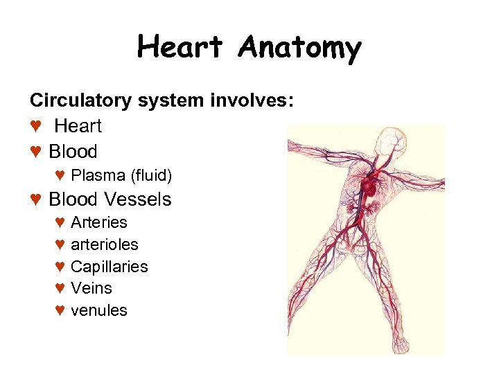 Heart Anatomy Circulatory system involves: ♥ Heart ♥ Blood ♥ Plasma (fluid) ♥ Blood