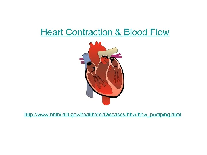 Heart Contraction & Blood Flow http: //www. nhlbi. nih. gov/health/dci/Diseases/hhw_pumping. html