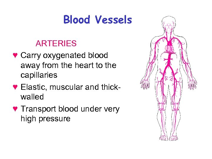 Blood Vessels ARTERIES ♥ Carry oxygenated blood away from the heart to the capillaries