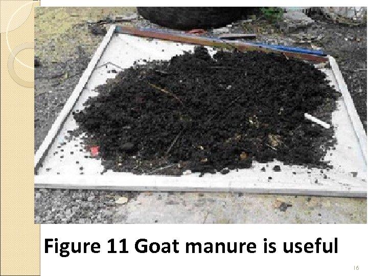Figure 11 Goat manure is useful 16