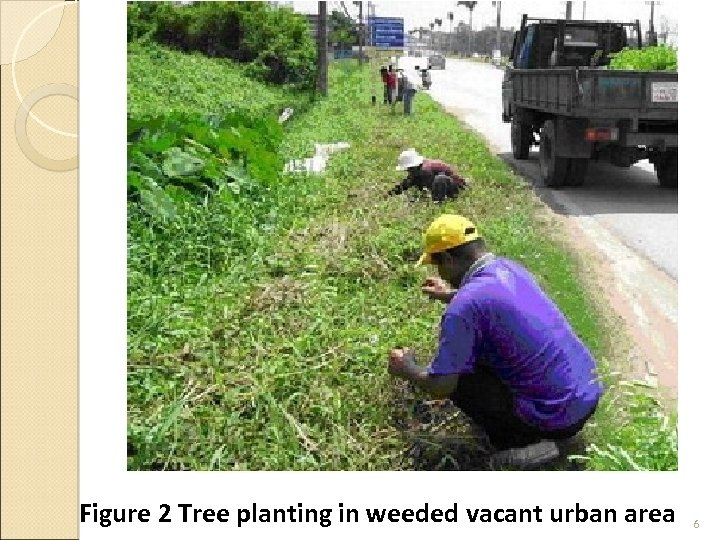 Figure 2 Tree planting in weeded vacant urban area 6