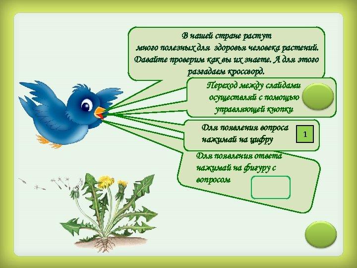 В нашей стране растут много полезных для здоровья человека растений. Давайте проверим как вы