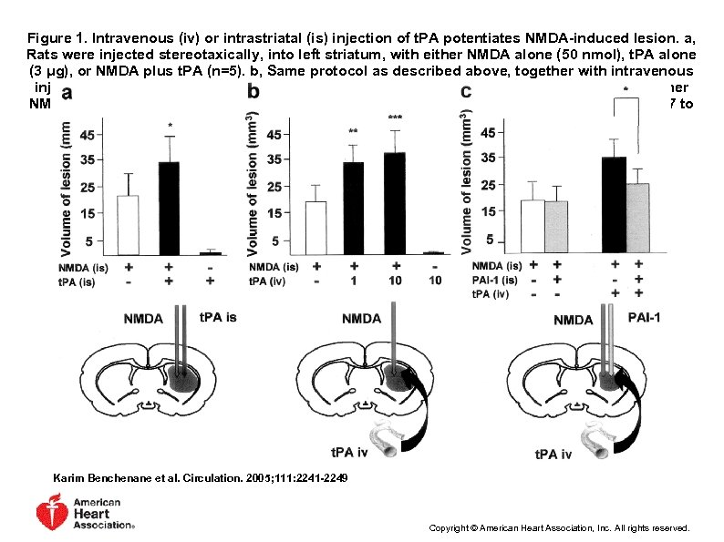 Figure 1. Intravenous (iv) or intrastriatal (is) injection of t. PA potentiates NMDA-induced lesion.