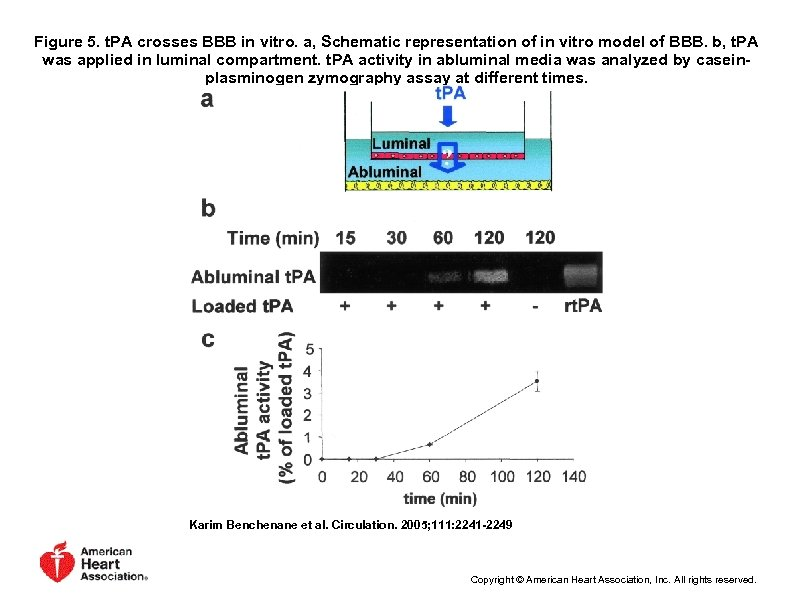 Figure 5. t. PA crosses BBB in vitro. a, Schematic representation of in vitro