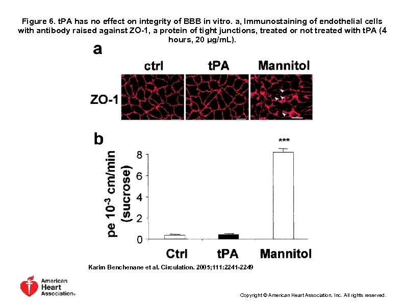 Figure 6. t. PA has no effect on integrity of BBB in vitro. a,