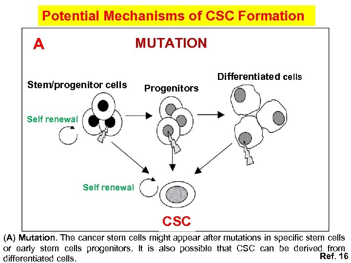 Potential Mechanisms of CSC Formation A MUTATION Stem/progenitor cells Differentiated cells Progenitors Self renewal