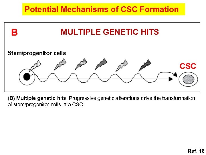 Potential Mechanisms of CSC Formation B MULTIPLE GENETIC HITS Stem/progenitor cells CSC (B) Multiple