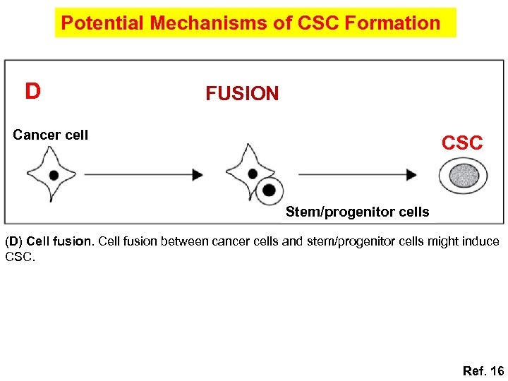 Potential Mechanisms of CSC Formation D FUSION Cancer cell CSC Stem/progenitor cells (D) Cell