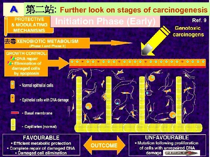 第二站: Further look on stages of carcinogenesis Ref. 9 Initiation Phase (Early) 去毒