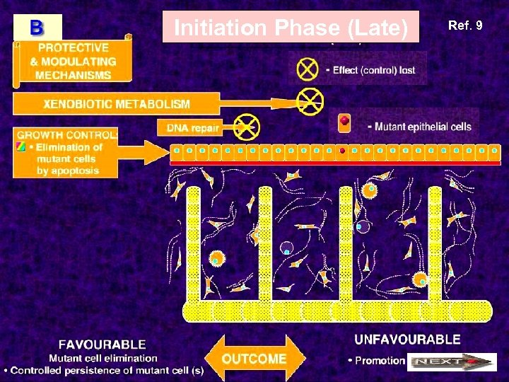 Initiation Phase (Late) Ref. 9