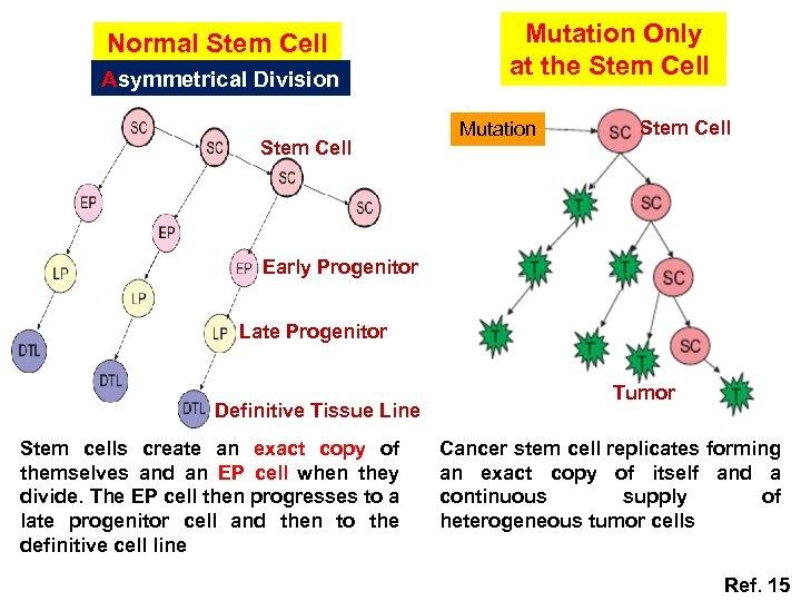 Normal Stem Cell Asymmetrical Division Stem Cell Mutation Only at the Stem Cell Mutation