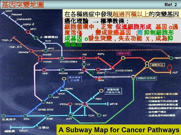 基因突變地圖 Ref. 2 在各種癌症中發現超過百種以上的突變基因 癌化理論 → 標準教條: 細胞循環中,正常 促進細胞形成 基因 o過 度活化 ,變成致癌基因 ;