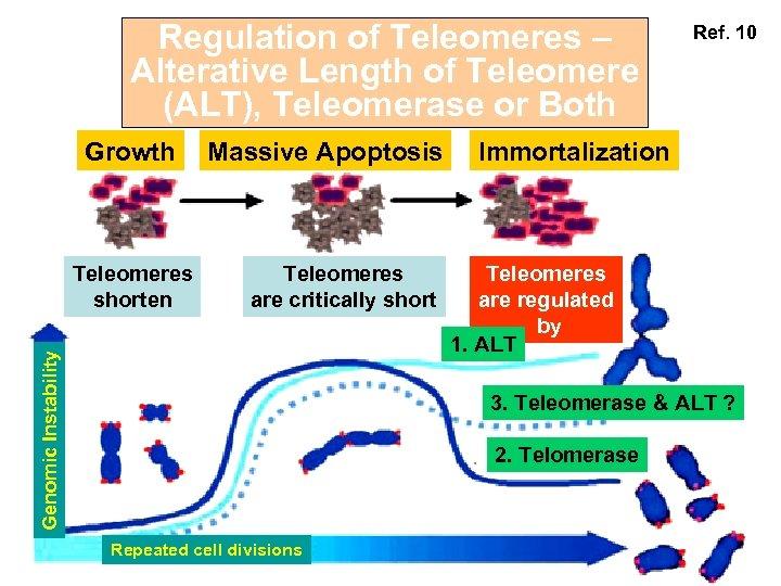 Regulation of Teleomeres – Alterative Length of Teleomere (ALT), Teleomerase or Both Growth Teleomeres