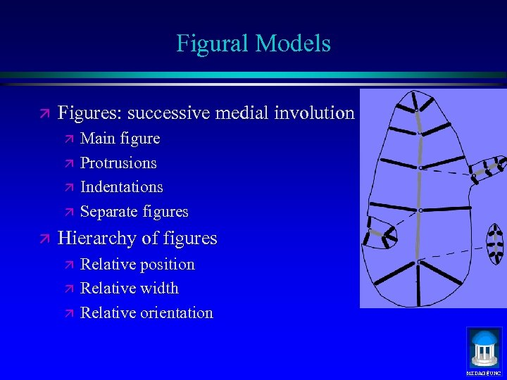 Figural Models ä Figures: successive medial involution ä ä ä Main figure Protrusions Indentations