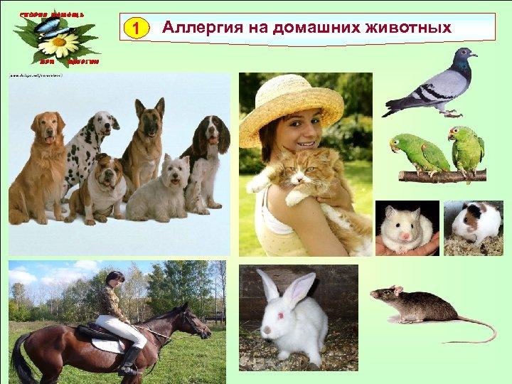 1 Аллергия на домашних животных