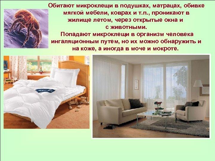 Обитают микроклещи в подушках, матрацах, обивке мягкой мебели, коврах и т. п. , проникают