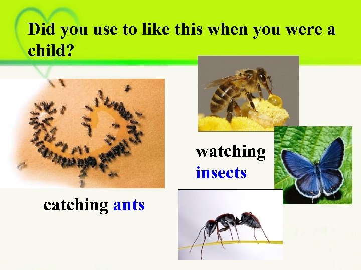 Did you use to like this when you were a child? watching insects catching
