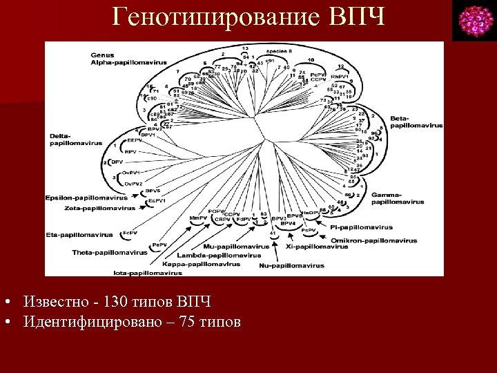 Генотипирование ВПЧ • Известно - 130 типов ВПЧ • Идентифицировано – 75 типов