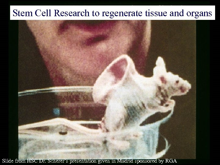 Stem Cell Research to regenerate tissue and organs Slide from HSC Dr. Scherer's presentation