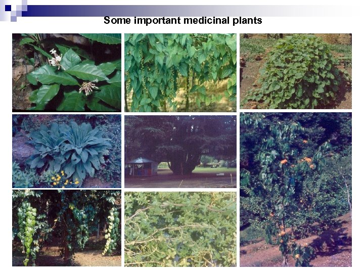 Some important medicinal plants