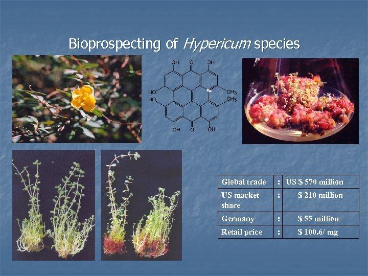 Bioprospecting of Hypericum species Global trade US $ 570 million : US market share
