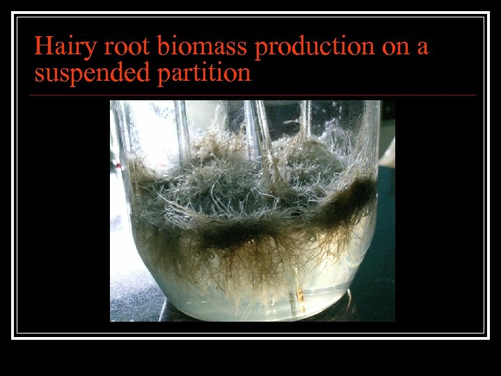 Hairy root biomass production on a suspended partition