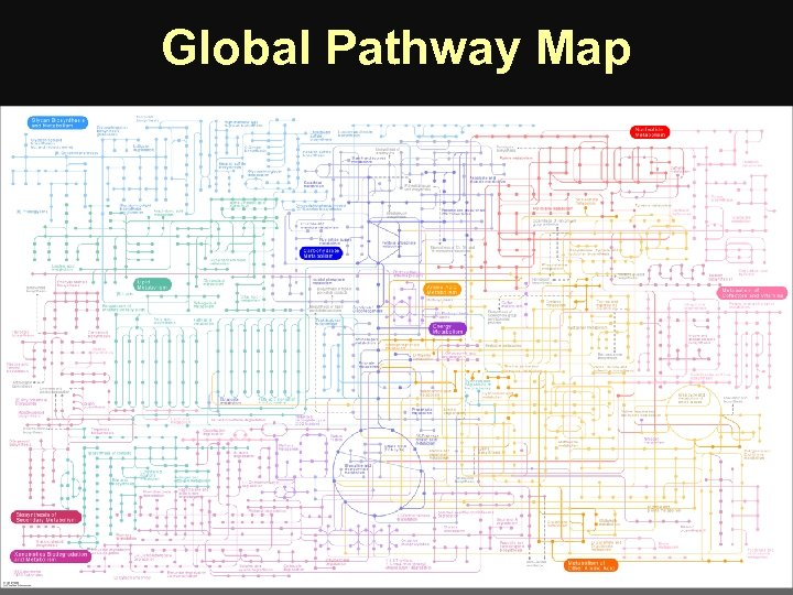 Global Pathway Map