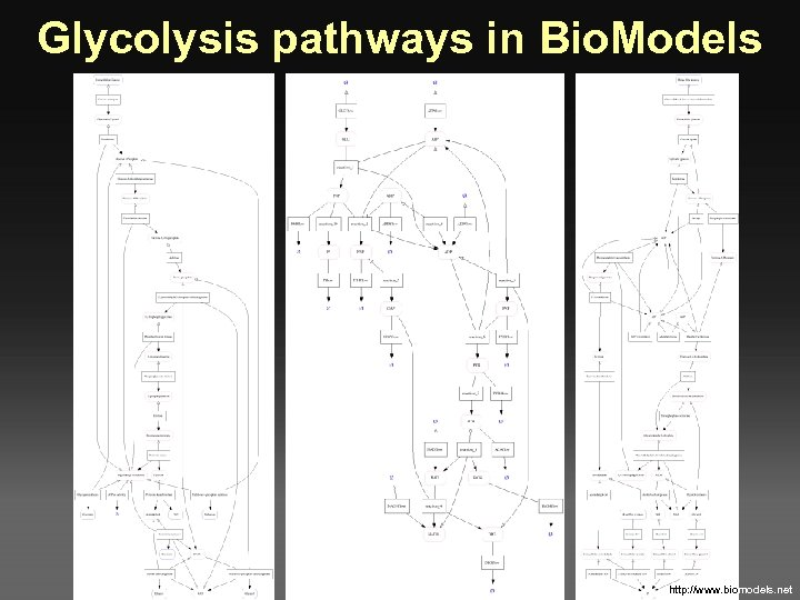 Glycolysis pathways in Bio. Models http: //www. biomodels. net