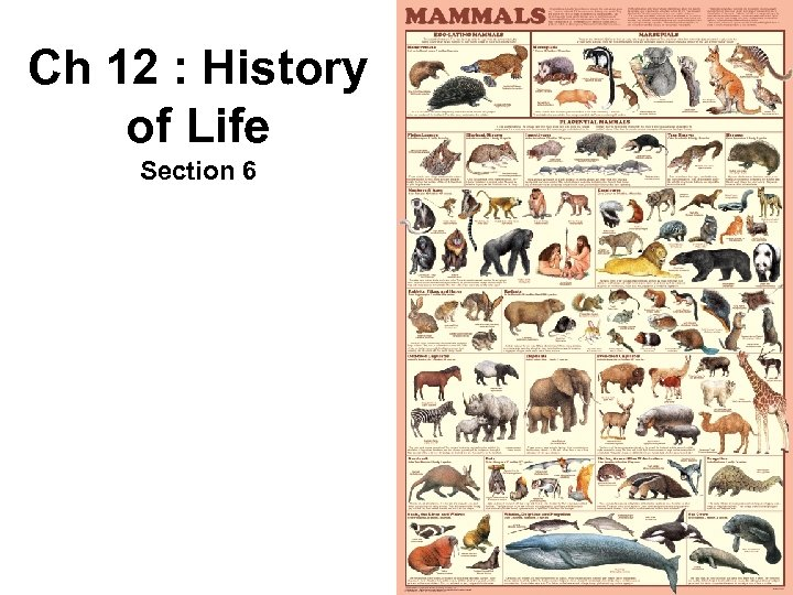 Ch 12 : History of Life Section 6