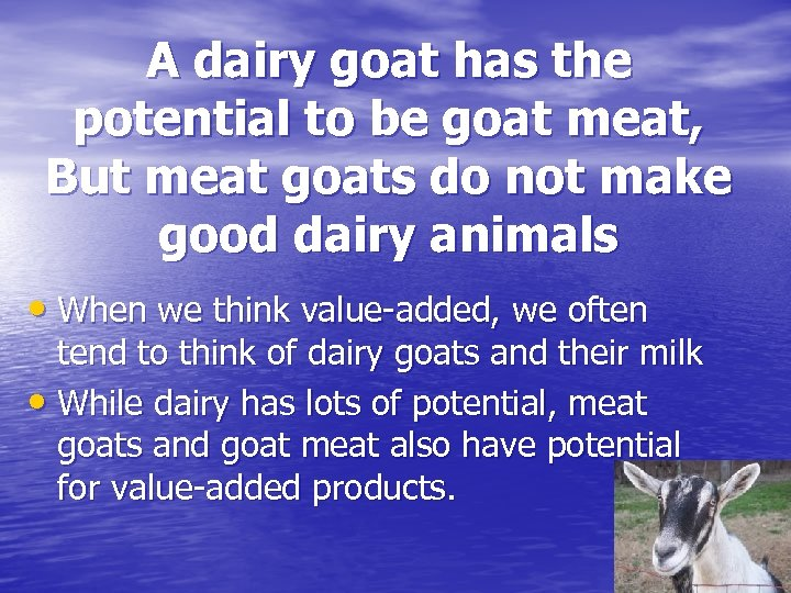 A dairy goat has the potential to be goat meat, But meat goats do