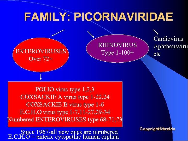 FAMILY: PICORNAVIRIDAE ENTEROVIRUSES Over 72+ RHINOVIRUS Type 1 -100+ Cardiovirus Aphthousvirus etc POLIO virus