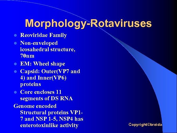 Morphology-Rotaviruses Reoviridae Family l Non-enveloped icosahedral structure, 70 nm l EM: Wheel shape l