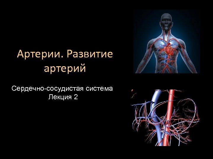 Артерии. Развитие артерий Сердечно-сосудистая система Лекция 2
