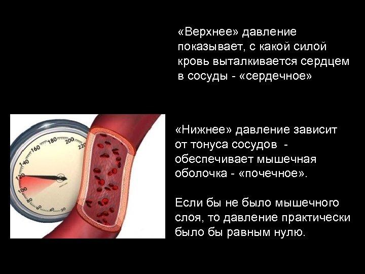 «Верхнее» давление показывает, с какой силой кровь выталкивается сердцем в сосуды - «сердечное»