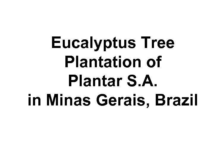 Eucalyptus Tree Plantation of Plantar S. A. in Minas Gerais, Brazil