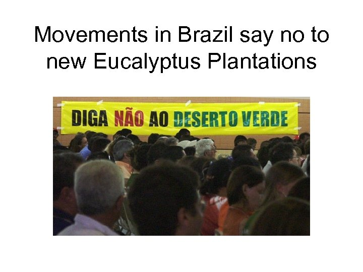 Movements in Brazil say no to new Eucalyptus Plantations