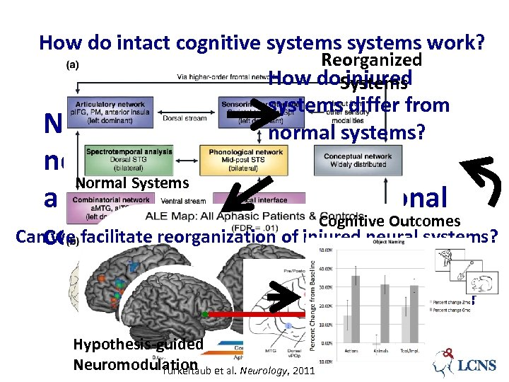 How do intact cognitive systems work? Reorganized How do. Systems injured systems differ from