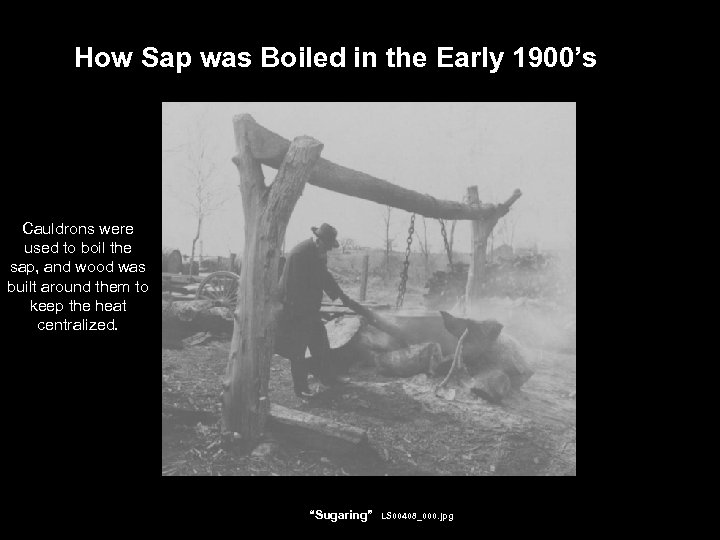 How Sap was Boiled in the Early 1900's Cauldrons were used to boil the