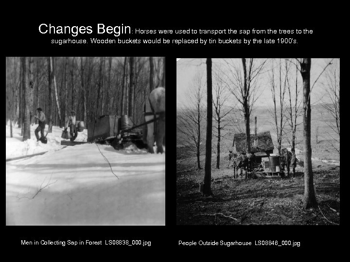 Changes Begin: Horses were used to transport the sap from the trees to the