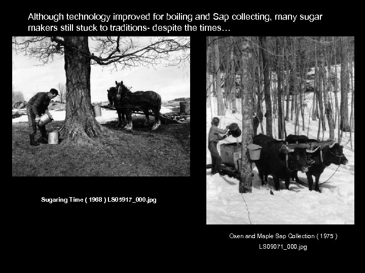 Although technology improved for boiling and Sap collecting, many sugar makers still stuck to