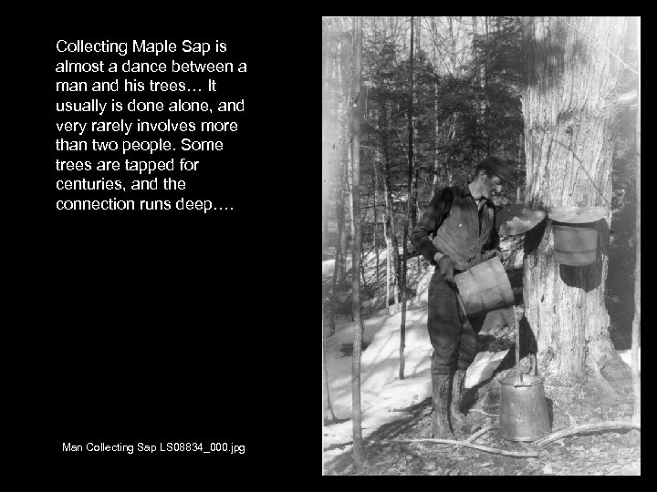 Collecting Maple Sap is almost a dance between a man and his trees… It