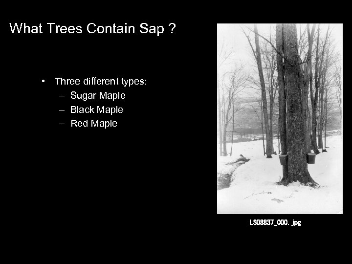 What Trees Contain Sap ? • Three different types: : – Sugar Maple –