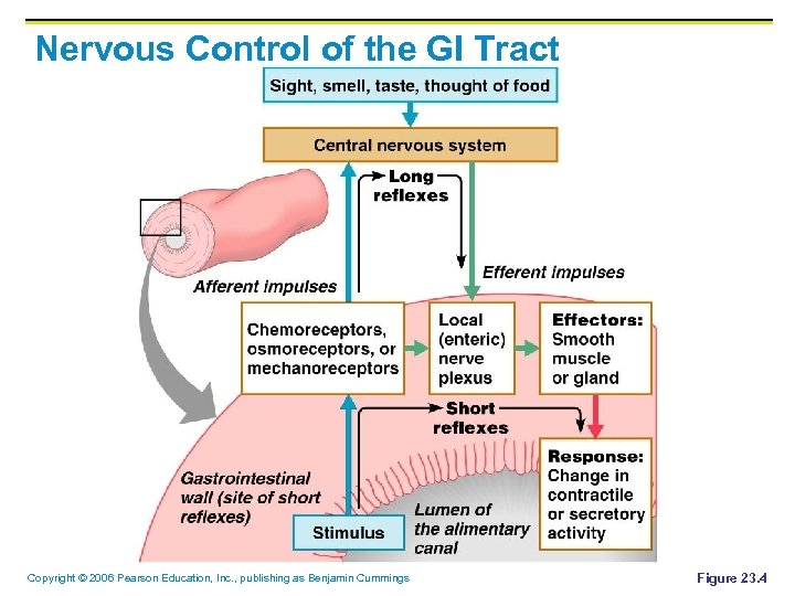 Nervous Control of the GI Tract Copyright © 2006 Pearson Education, Inc. , publishing