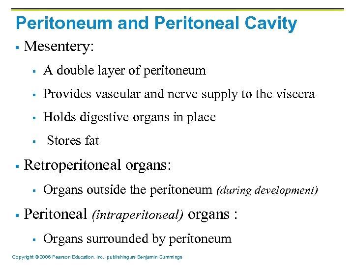 Peritoneum and Peritoneal Cavity § Mesentery: § A double layer of peritoneum § Provides