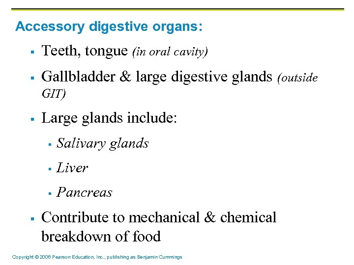 Accessory digestive organs: § Teeth, tongue (in oral cavity) § Gallbladder & large digestive