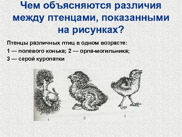 Чем объясняются различия между птенцами, показанными на рисунках? Птенцы различных птиц в одном возрасте: