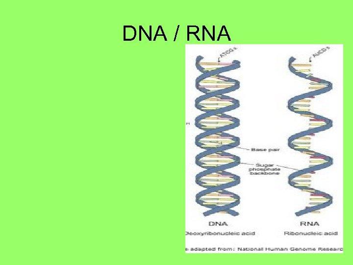 DNA / RNA