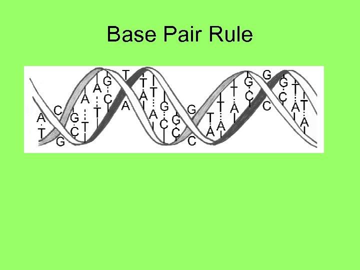 Base Pair Rule