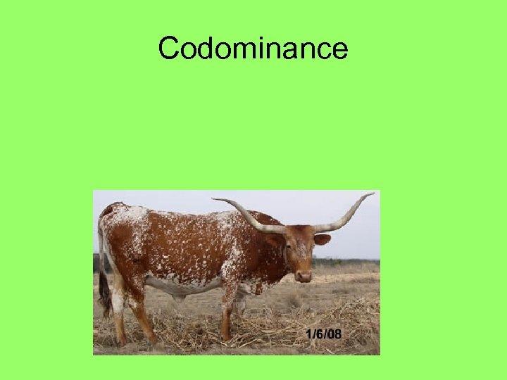 Codominance